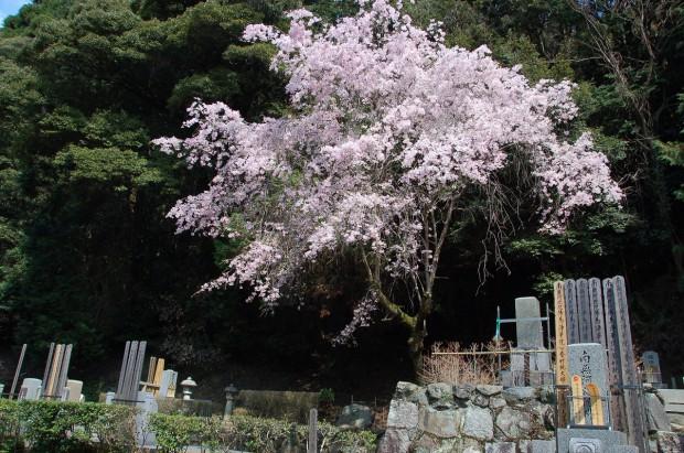 20140409 015 谷崎潤一郎墓 法然院
