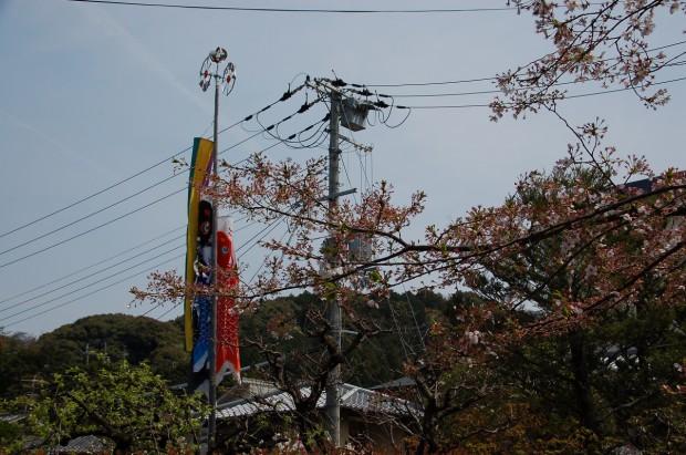 20140412 030 こいのぼり 哲学の道(銀閣寺前町 高折宅