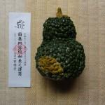 南禅寺のハス開花 安楽寺かぼちゃ供養おしらせ