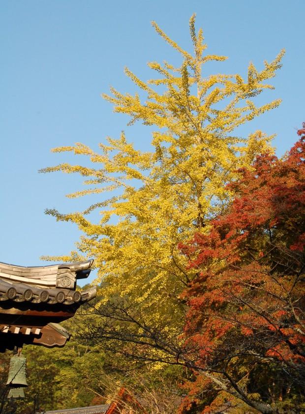14.11.07 (42)南禅寺