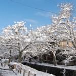 大雪の哲学の道