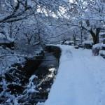 哲学の道の雪景色