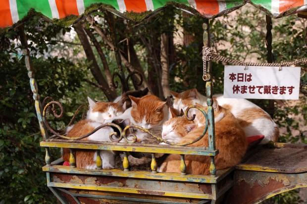 ④ 15.01.01 (19)野良猫 哲学の道若王子橋北