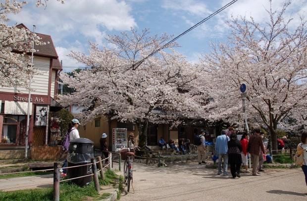 春  20140402 0041哲学の道(自宅前)