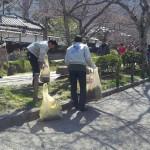哲学の道「春の掃除」終了/桜もうすぐ咲き始めるか
