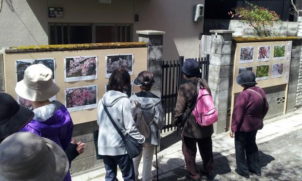②B 15.04.02 (16)桜まつり写真展 2寺下左