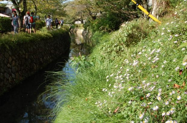 ①ヨメナ 15.09.22 (24)仙太橋
