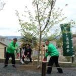 50周年記念植樹祭・八重桜が満開