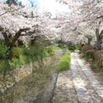 「哲学の道・春の大掃除と第8回桜まつり」のお知らせ